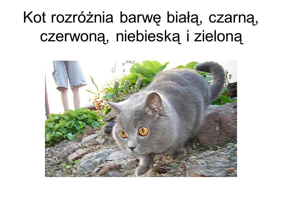 Kot rozróżnia barwę białą, czarną, czerwoną, niebieską i zieloną