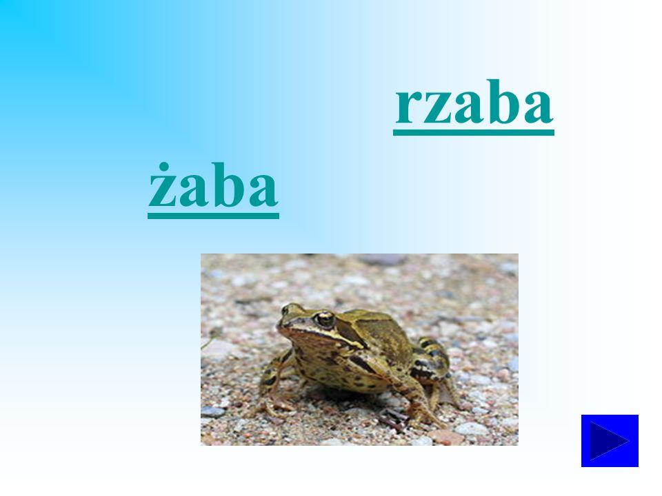 rzaba żaba