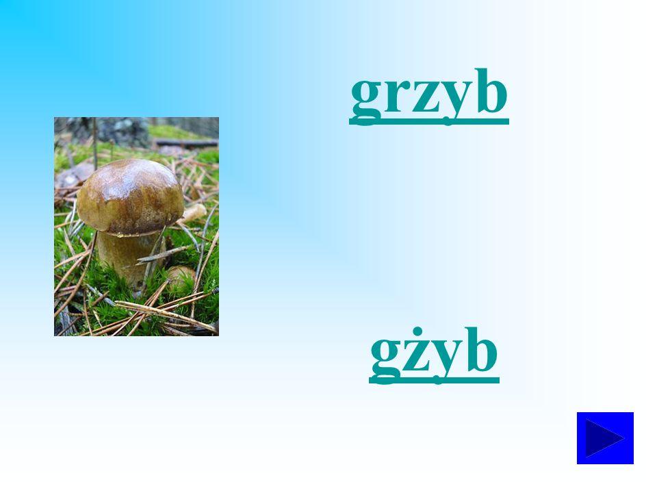 grzyb gżyb