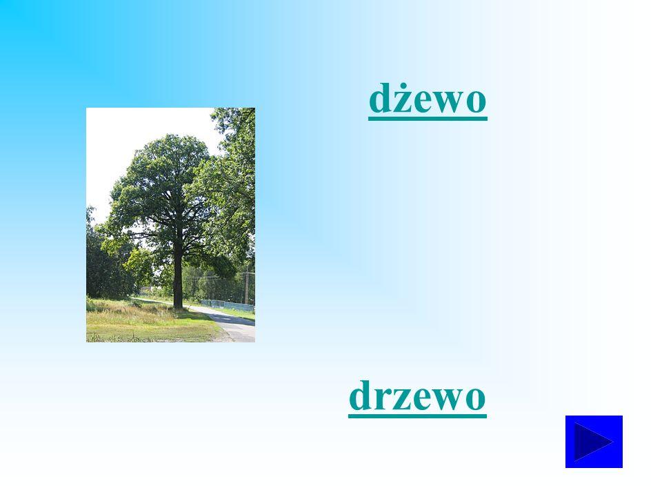 dżewo drzewo