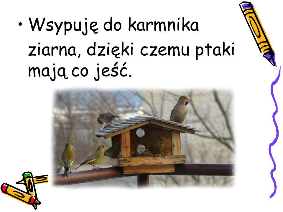 Wsypuję do karmnika ziarna, dzięki czemu ptaki mają co jeść.