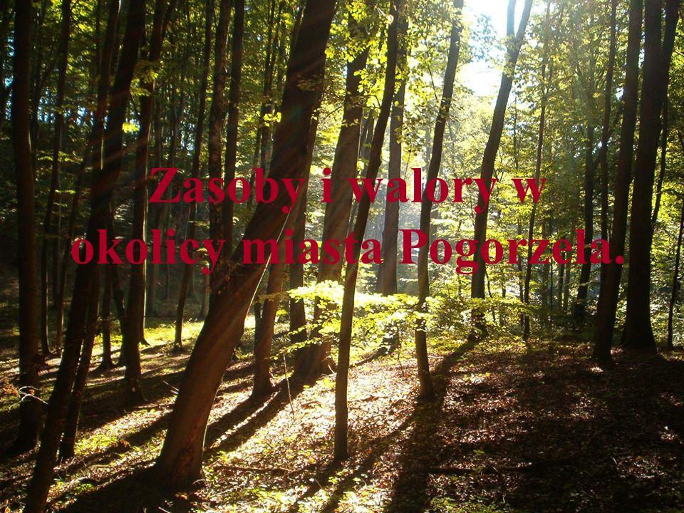 Zasoby i walory w okolicy miasta Pogorzela.