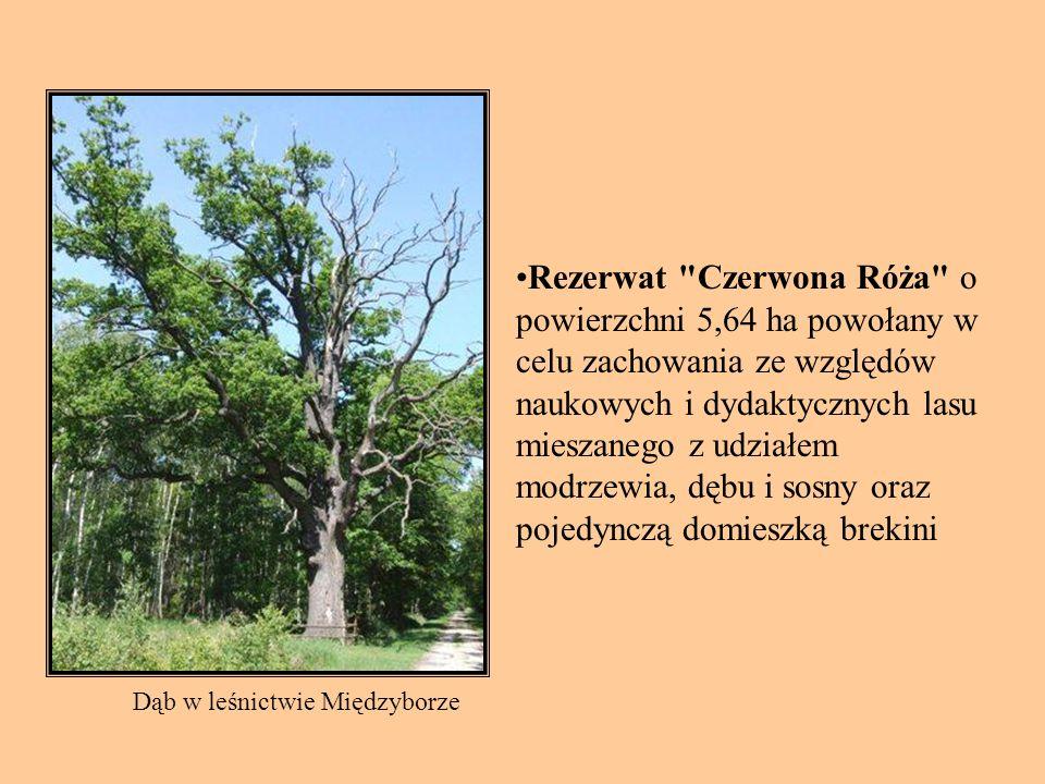 Rezerwat Czerwona Róża o powierzchni 5,64 ha powołany w celu zachowania ze względów naukowych i dydaktycznych lasu mieszanego z udziałem modrzewia, dębu i sosny oraz pojedynczą domieszką brekini