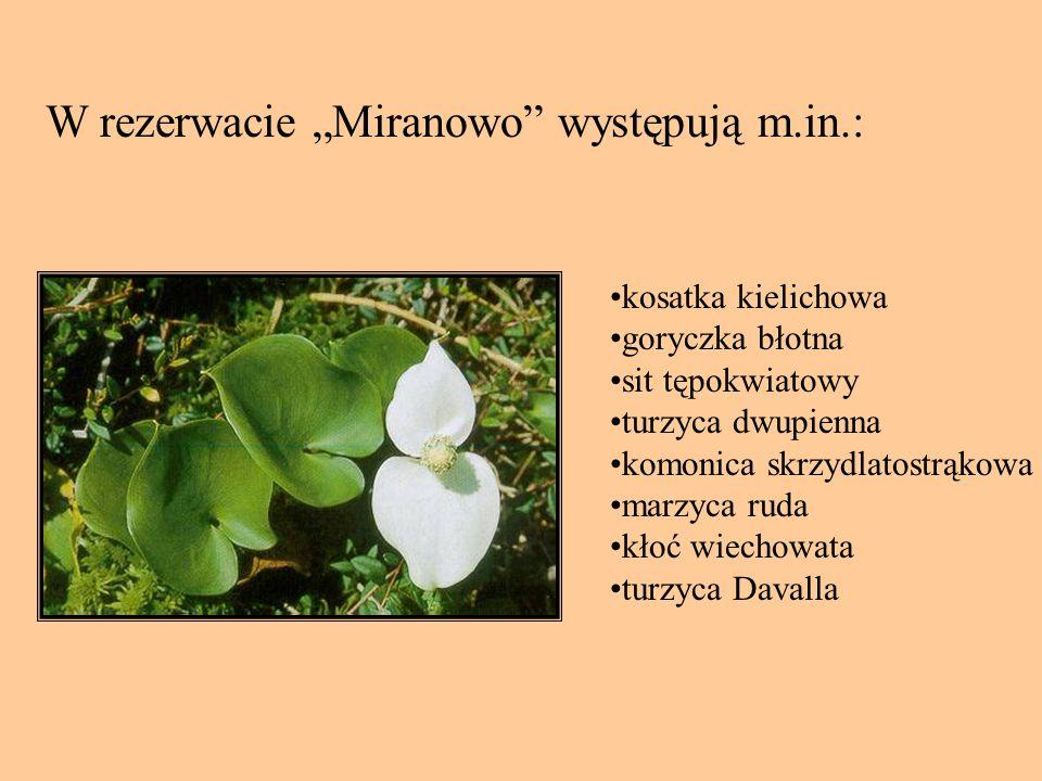 """W rezerwacie """"Miranowo występują m.in.:"""