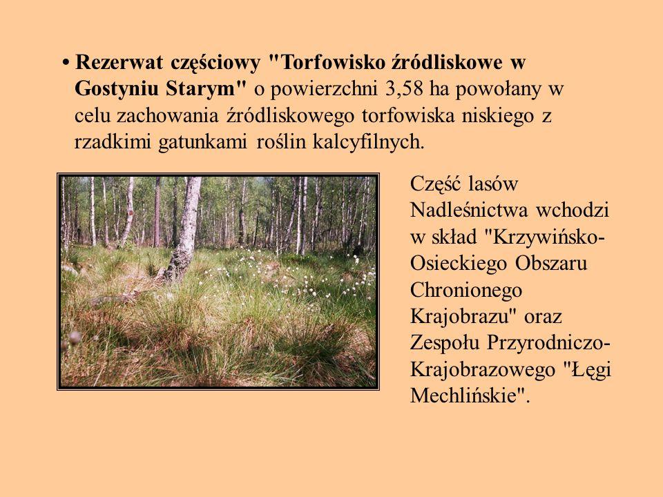 • Rezerwat częściowy Torfowisko źródliskowe w Gostyniu Starym o powierzchni 3,58 ha powołany w celu zachowania źródliskowego torfowiska niskiego z rzadkimi gatunkami roślin kalcyfilnych.