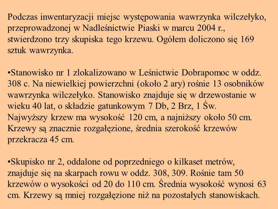 Podczas inwentaryzacji miejsc występowania wawrzynka wilczełyko, przeprowadzonej w Nadleśnictwie Piaski w marcu 2004 r., stwierdzono trzy skupiska tego krzewu. Ogółem doliczono się 169 sztuk wawrzynka.