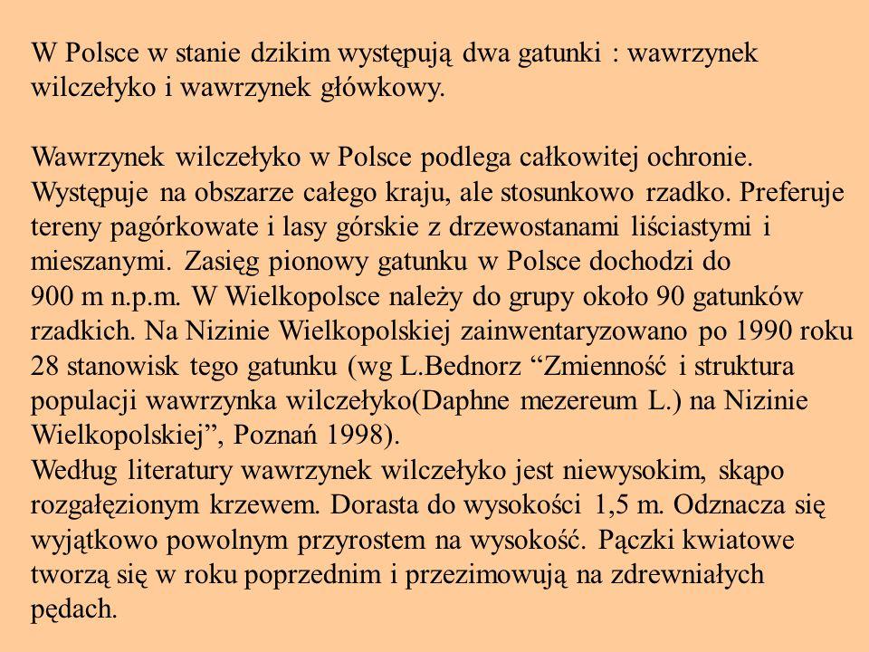 W Polsce w stanie dzikim występują dwa gatunki : wawrzynek wilczełyko i wawrzynek główkowy.