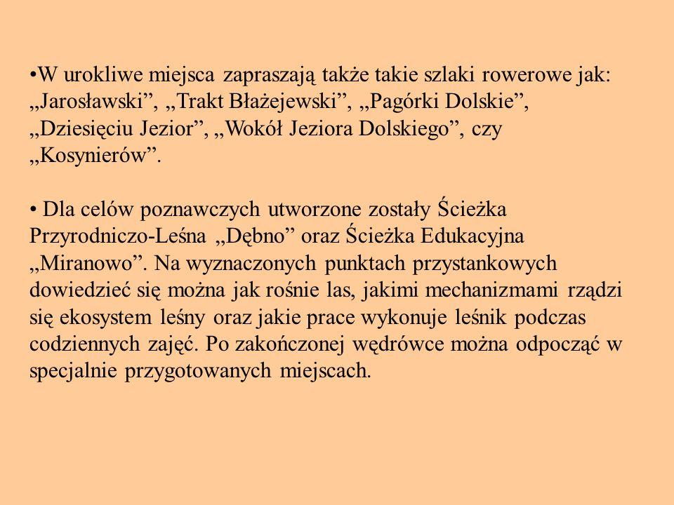 """•W urokliwe miejsca zapraszają także takie szlaki rowerowe jak: """"Jarosławski , """"Trakt Błażejewski , """"Pagórki Dolskie , """"Dziesięciu Jezior , """"Wokół Jeziora Dolskiego , czy """"Kosynierów ."""