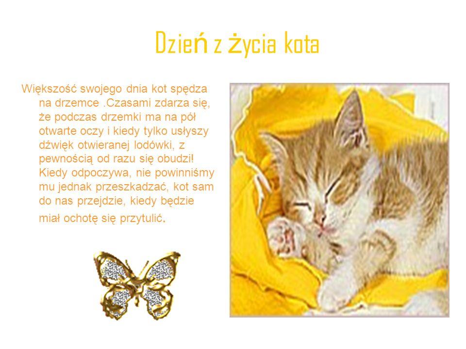 Dzień z życia kota