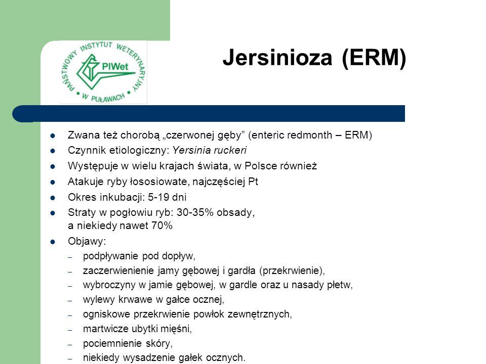 """Jersinioza (ERM) Zwana też chorobą """"czerwonej gęby (enteric redmonth – ERM) Czynnik etiologiczny: Yersinia ruckeri."""