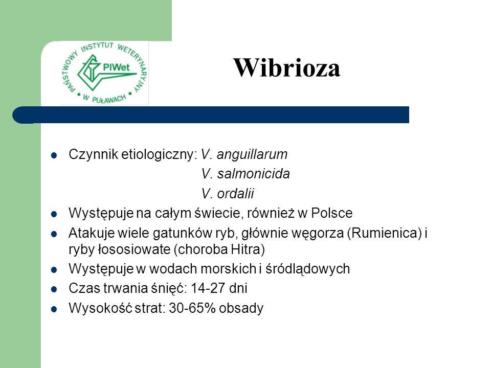 Wibrioza Czynnik etiologiczny: V. anguillarum V. salmonicida