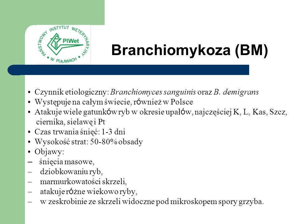 Branchiomykoza (BM) Czynnik etiologiczny: Branchiomyces sanguinis oraz B. demigrans. Występuje na całym świecie, również w Polsce.