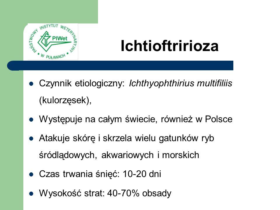Ichtioftririoza Czynnik etiologiczny: Ichthyophthirius multifiliis (kulorzęsek), Występuje na całym świecie, również w Polsce.