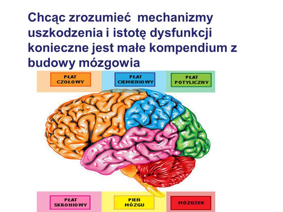 Chcąc zrozumieć mechanizmy uszkodzenia i istotę dysfunkcji konieczne jest małe kompendium z budowy mózgowia