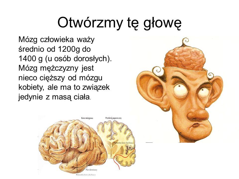Otwórzmy tę głowę Mózg człowieka waży średnio od 1200g do