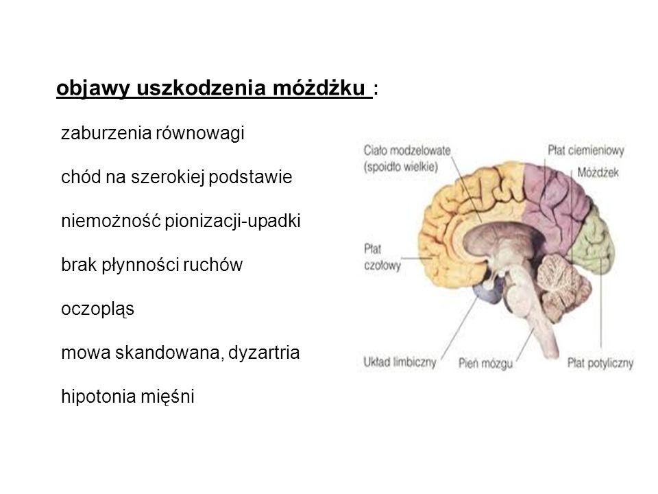 objawy uszkodzenia móżdżku : zaburzenia równowagi chód na szerokiej podstawie niemożność pionizacji-upadki brak płynności ruchów oczopląs mowa skandowana, dyzartria hipotonia mięśni
