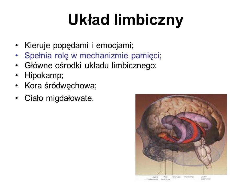 Układ limbiczny Kieruje popędami i emocjami;