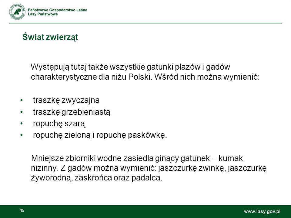 Świat zwierząt Występują tutaj także wszystkie gatunki płazów i gadów charakterystyczne dla niżu Polski. Wśród nich można wymienić: