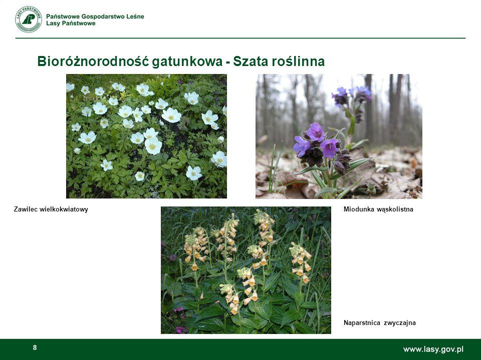 Bioróżnorodność gatunkowa - Szata roślinna