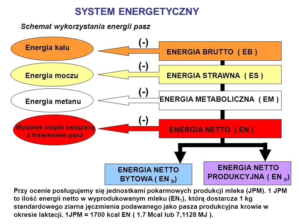 SYSTEM ENERGETYCZNY (-) (-) (-) (-) Schemat wykorzystania energii pasz