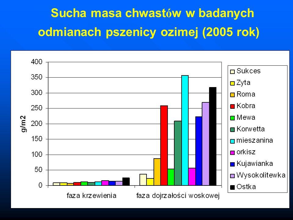 Sucha masa chwastów w badanych odmianach pszenicy ozimej (2005 rok)