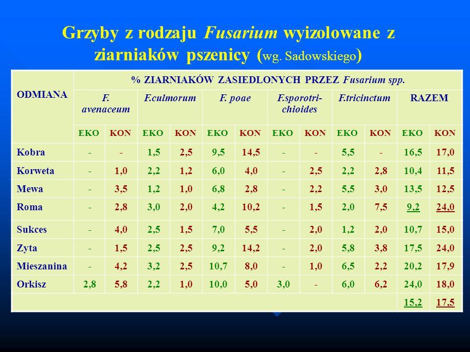 % ZIARNIAKÓW ZASIEDLONYCH PRZEZ Fusarium spp.