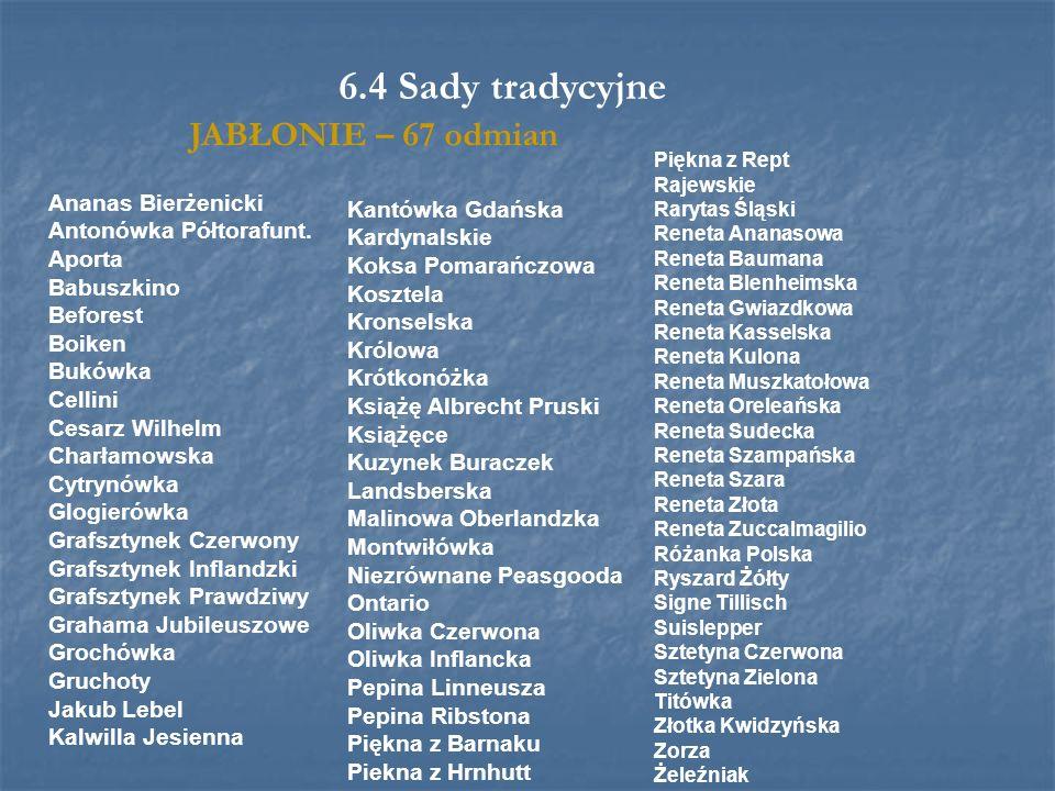 6.4 Sady tradycyjne JABŁONIE – 67 odmian Ananas Bierżenicki