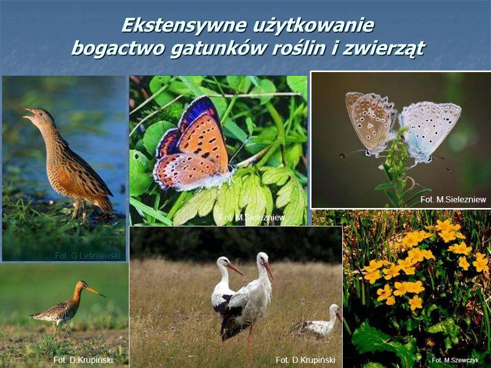Ekstensywne użytkowanie bogactwo gatunków roślin i zwierząt