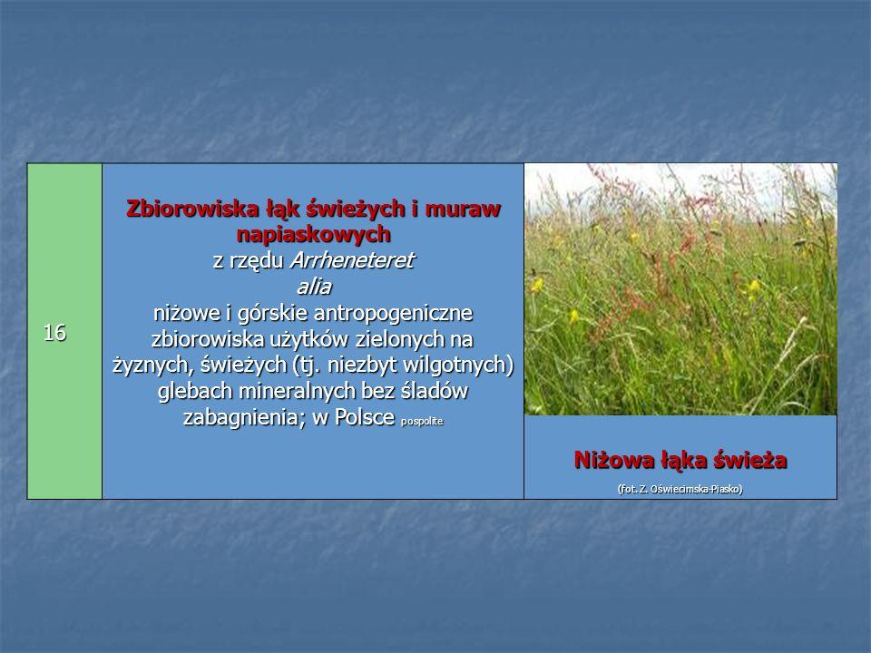 Zbiorowiska łąk świeżych i muraw napiaskowych z rzędu Arrheneteret