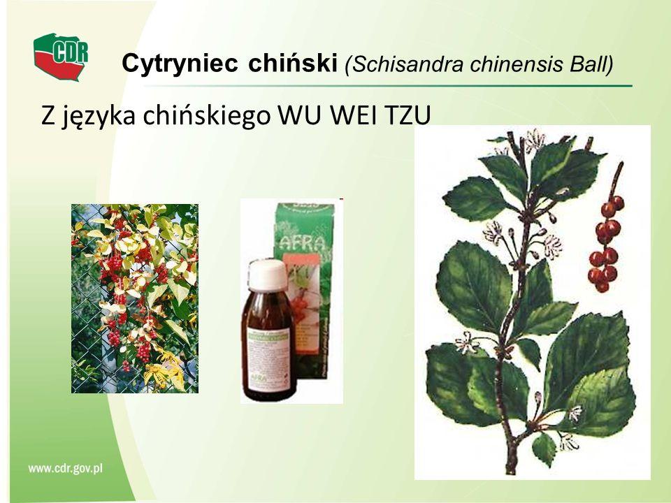 Cytryniec chiński (Schisandra chinensis Ball)
