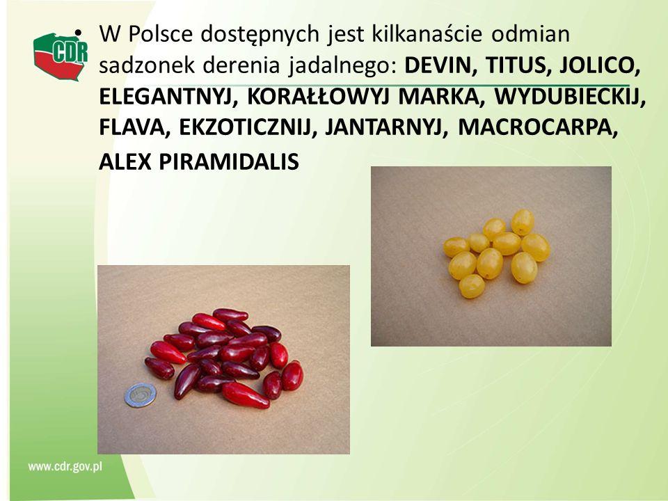 W Polsce dostępnych jest kilkanaście odmian sadzonek derenia jadalnego: DEVIN, TITUS, JOLICO, ELEGANTNYJ, KORAŁŁOWYJ MARKA, WYDUBIECKIJ, FLAVA, EKZOTICZNIJ, JANTARNYJ, MACROCARPA, ALEX PIRAMIDALIS
