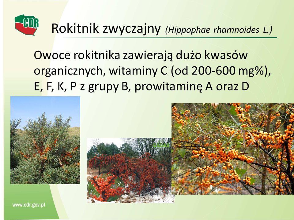 Rokitnik zwyczajny (Hippophae rhamnoides L.)