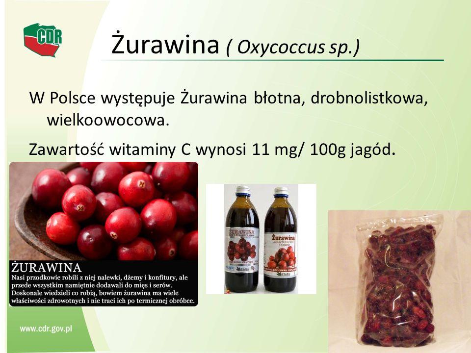 Żurawina ( Oxycoccus sp.)