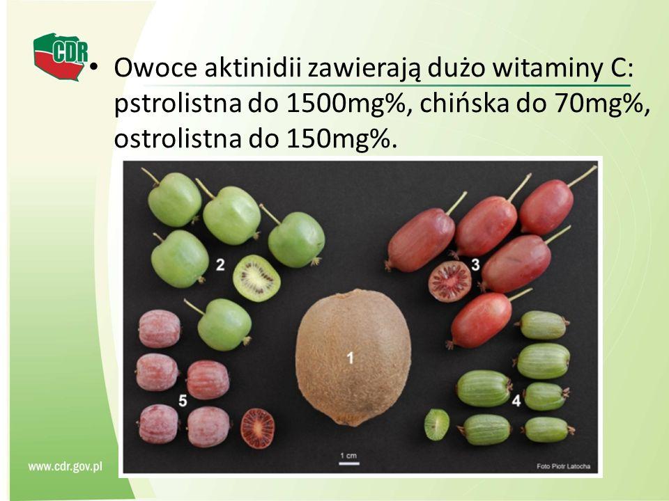 Owoce aktinidii zawierają dużo witaminy C: pstrolistna do 1500mg%, chińska do 70mg%, ostrolistna do 150mg%.