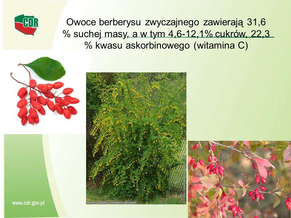 Owoce berberysu zwyczajnego zawierają 31,6 % suchej masy, a w tym 4,6-12,1% cukrów, 22,3 % kwasu askorbinowego (witamina C)