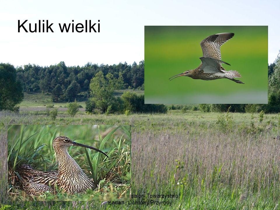 Ludwik Maksalon; Towarzystwo Badań i Ochrony Przyrody