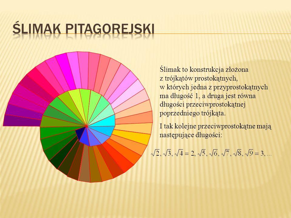 Ślimak pitagorejski