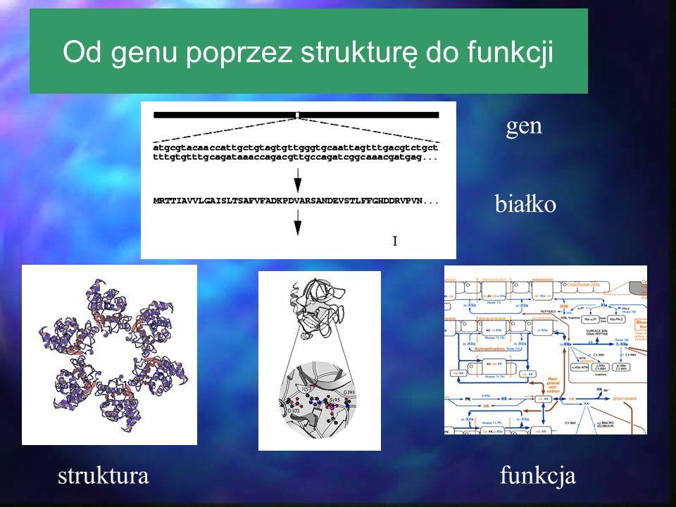 Od genu poprzez strukturę do funkcji