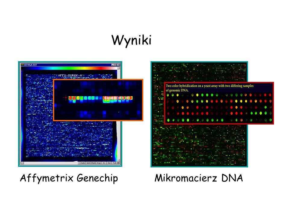 Wyniki Affymetrix Genechip Mikromacierz DNA