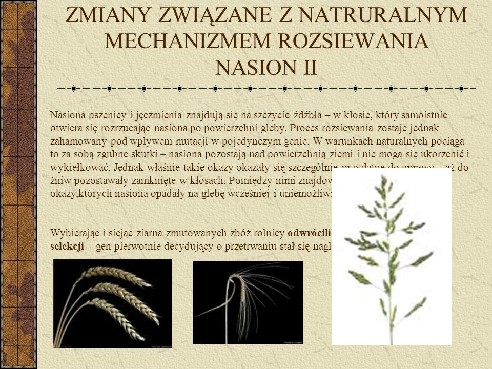 ZMIANY ZWIĄZANE Z NATRURALNYM MECHANIZMEM ROZSIEWANIA NASION II