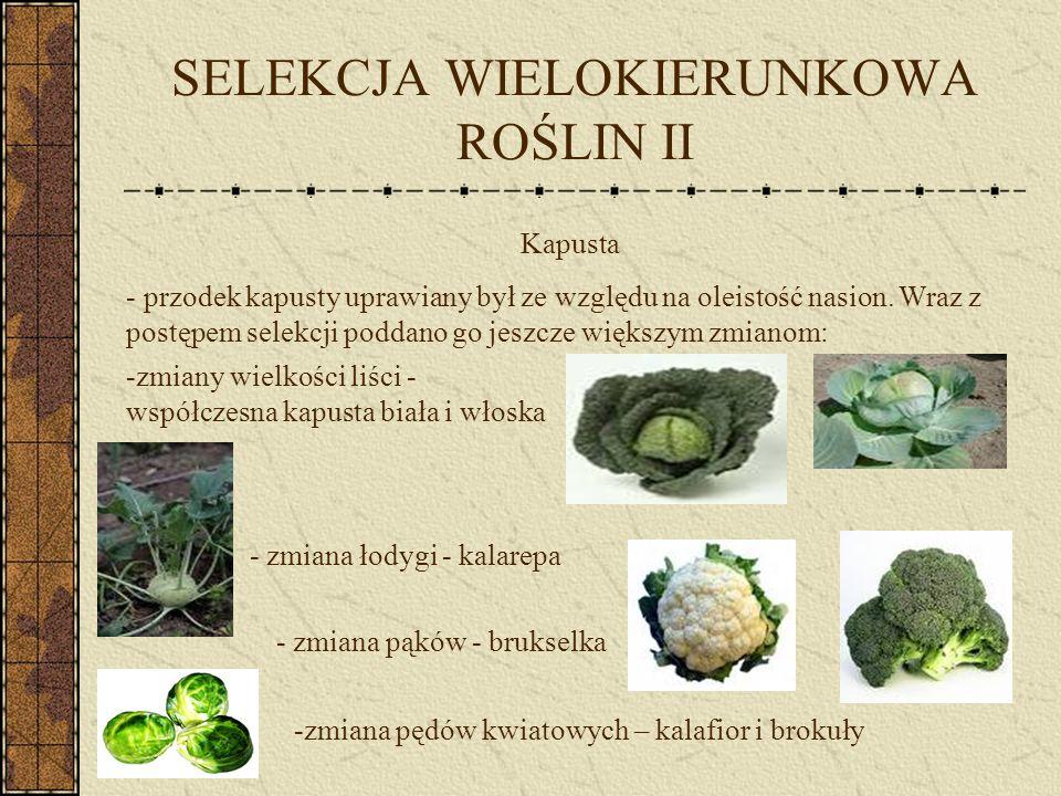 SELEKCJA WIELOKIERUNKOWA ROŚLIN II