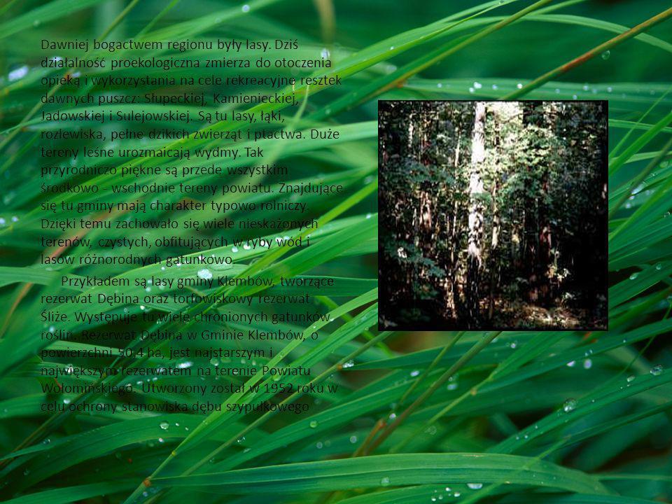 Dawniej bogactwem regionu były lasy