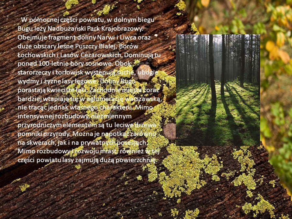 W północnej części powiatu, w dolnym biegu Bugu leży Nadbużański Park Krajobrazowy.