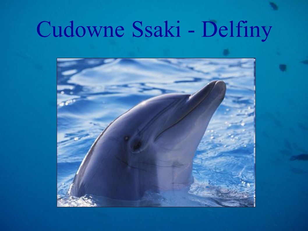 Cudowne Ssaki - Delfiny