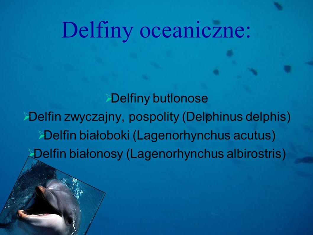 Delfiny oceaniczne: Delfiny butlonose