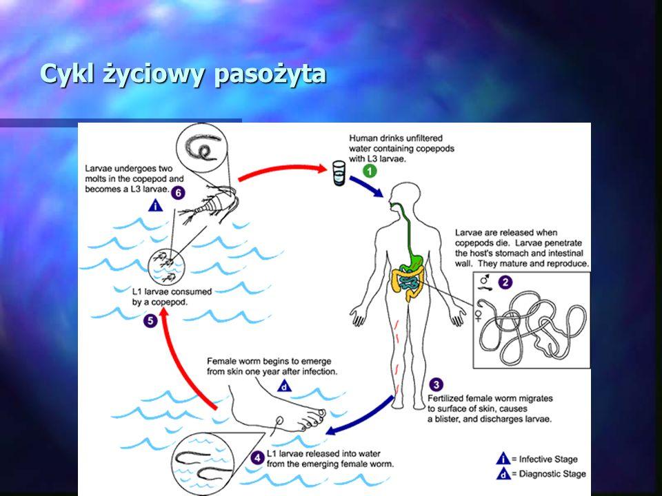 Cykl życiowy pasożyta