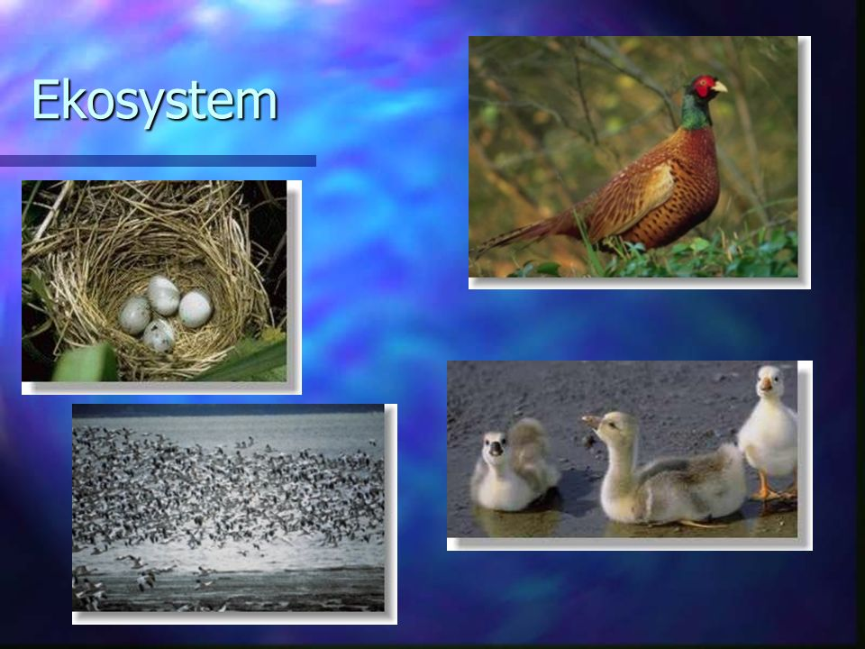 Ekosystem