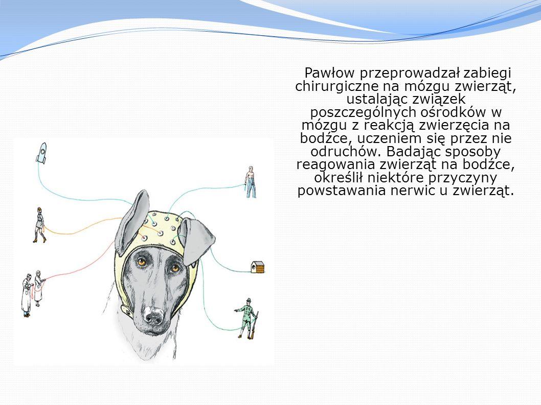Pawłow przeprowadzał zabiegi chirurgiczne na mózgu zwierząt, ustalając związek poszczególnych ośrodków w mózgu z reakcją zwierzęcia na bodźce, uczeniem się przez nie odruchów. Badając sposoby reagowania zwierząt na bodźce, określił niektóre przyczyny powstawania nerwic u zwierząt.