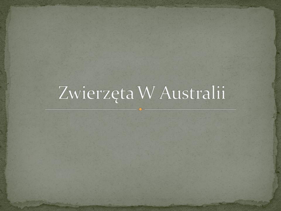 Zwierzęta W Australii