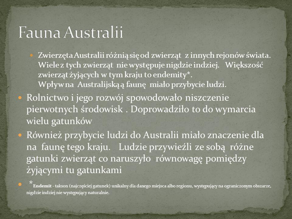 Fauna Australii